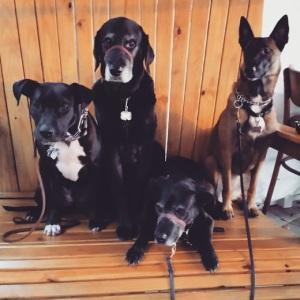Lucho, Zeke, Hannah Bean and Charlotte (aka. Checkpoint Charlie)