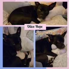 OliveHope-July2021